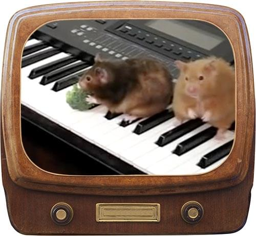 Hamsters Can't Play The Piano Video