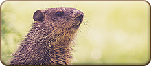 Featured Groundhog Day Resources