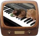 Hamsters Can't Play The Piano Video - MP4 Download